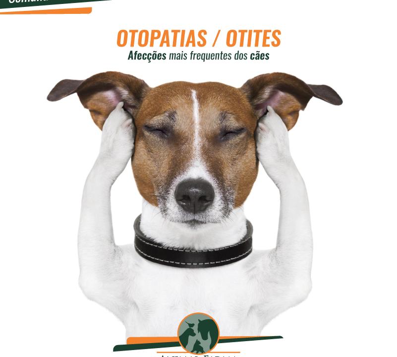Otite Canina
