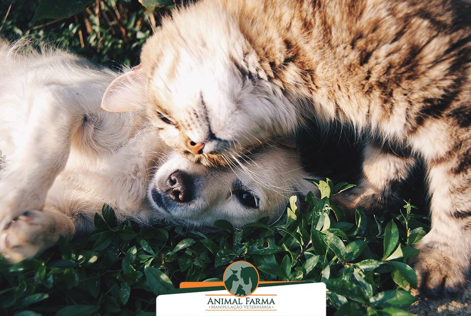 vantagens medicamento manipulado pets